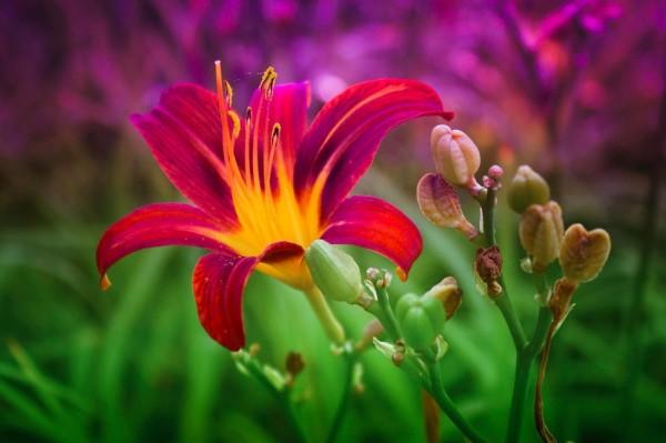Beautiful-Flower--600x399.jpg
