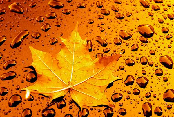 little-leaf-rainstrom.jpg