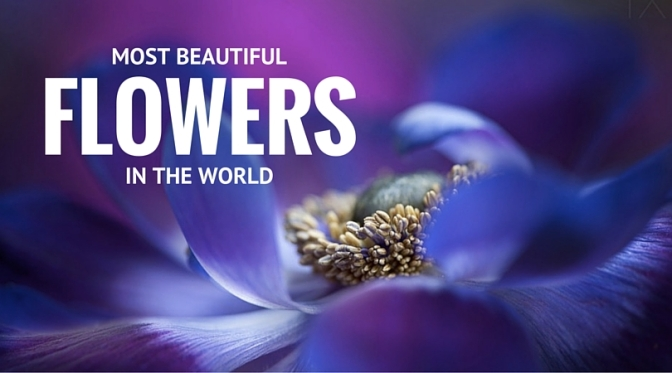 Most-Beautiful-Flowers-in-the-World.jpg